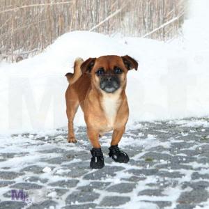 TRIXIE cipelice za pse WALKER ACTIVE