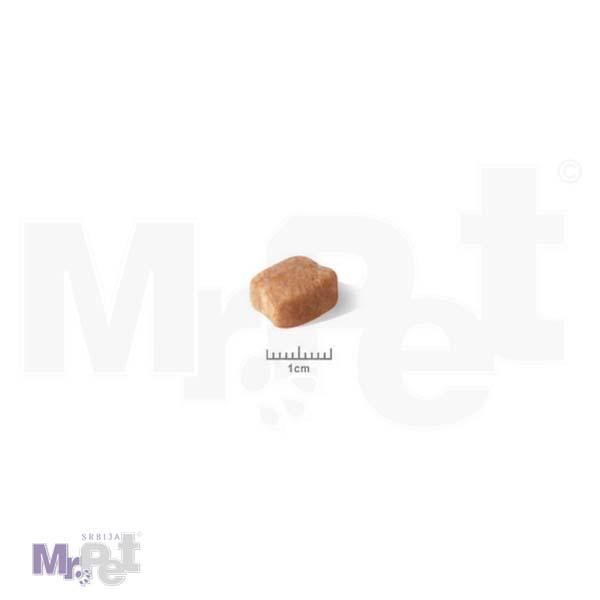 dachshund adult food 2